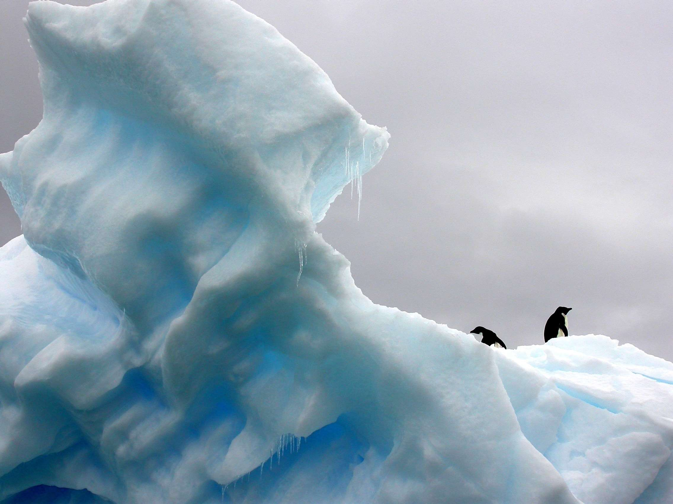 Penguins on an iceberg Antarctica Travel