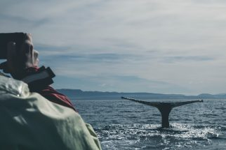whale watching in kailoura new zealand